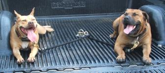 Custom 2 Dog Tie Down