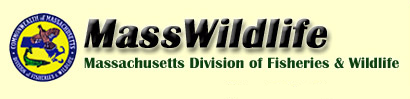 Massachusetts Hunting and Fishing Licenses