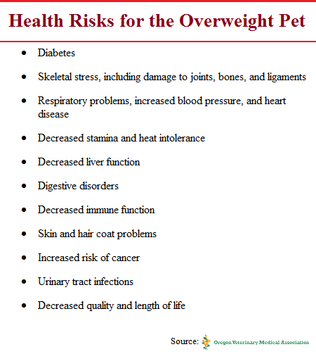 Health Risks fot the Overweight Pet