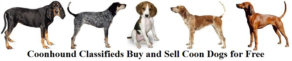 Coonhound Classifieds Buy and Sell Coon Dogs for Free